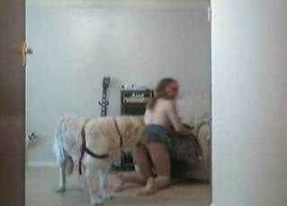 Hairy doggy fucks a slutty musician