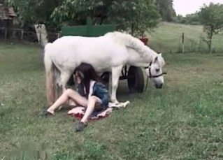 White horse enjoys blowjob
