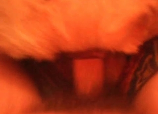 POV and close-ups in a hot zoo vid